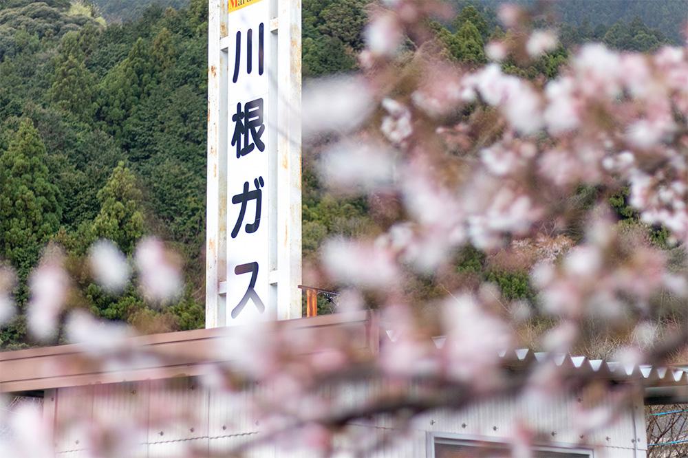 桜の季節の川根ガス