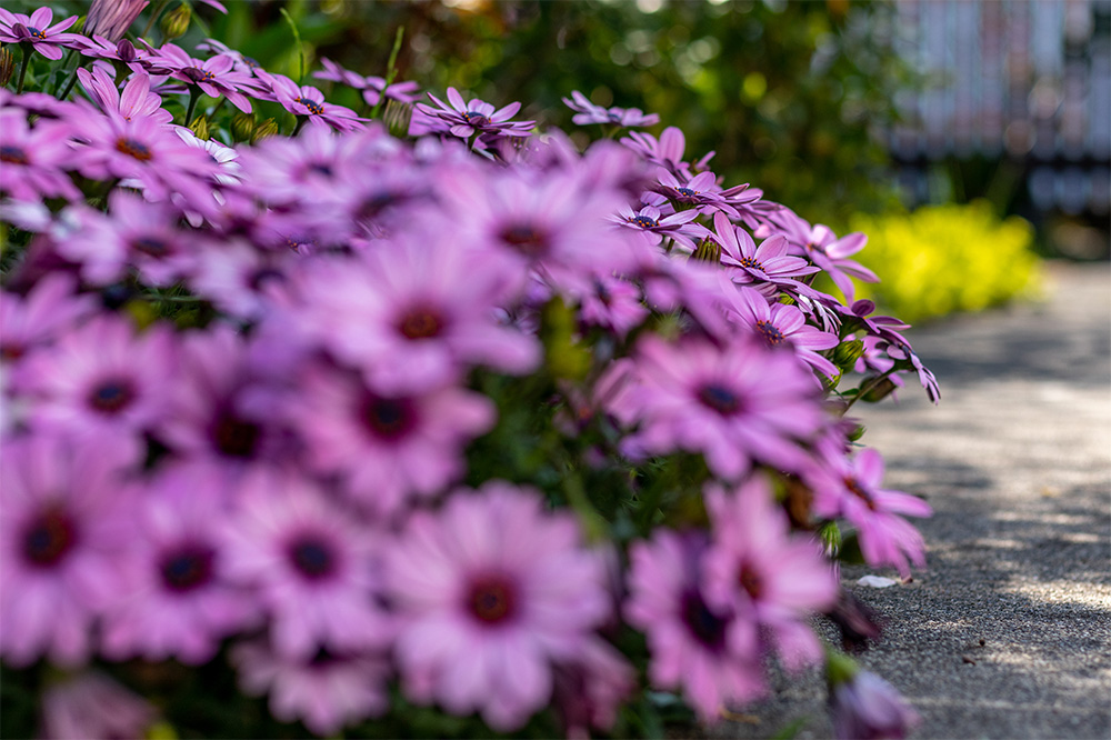 植敏造園で植えた花